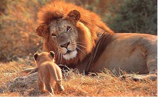 senegal safari 11