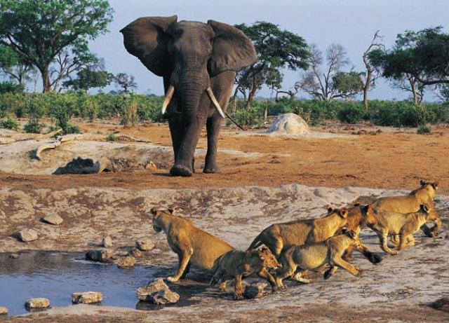 senegal safari 12