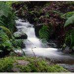 foresta el cedro hermigua-la-gomera