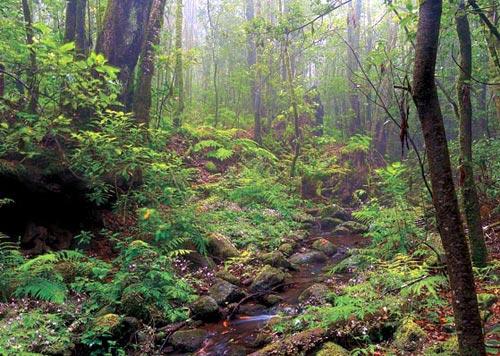 la-gomera-foresta